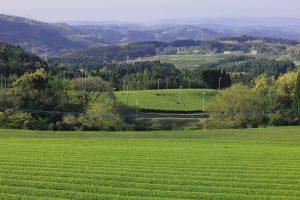 kagoshima organic fields